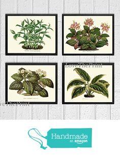 House Plant Print Set of 4 Antique Beautiful Botanical Green Leaf Blooming Flowers Nature Home Room Decor Wall Art Unframed HO from LoveThePrint https://www.amazon.com/dp/B01LWELNKW/ref=hnd_sw_r_pi_dp_6jR6xbHQMC2PQ #handmadeatamazon