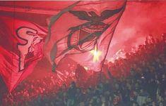 Benfica Wallpaper, Al Ahly Sc, 1, Twitter, Fans, Martini, Adidas Originals, Colors, Instagram