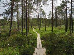 Puurijärvi-Isosuo National Park