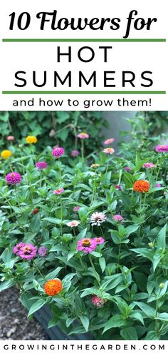 Garden Planning Wondering which annual flowers can take the heat of a hot summer? Keep reading for 10 flowers that love hot summers – and how to grow them. The key is knowing what and when to plant. Summer Plants, Summer Garden, Summer Flowers To Plant, Garden Kids, Planting Seeds, Planting Flowers, Flowers Garden, Flower Gardening, Garden Plants