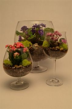 Plant a terrarium in any type of glassware you desire, such as champagne flutes, martini glasses, brandy snifters and margarita glasses. The bigger the glass, the more plants you can fit in your terrarium. Mini Terrarium, Terrarium Plants, Glass Terrarium, Succulent Terrarium, Planting Succulents, Planting Flowers, Terrarium Centerpiece, Kitchen Plants, Paludarium