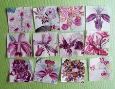 Vintage Orchid Botanical Print