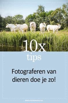 10x tips - dieren fotograferen, van huisdieren tot wildlife - Fotografille