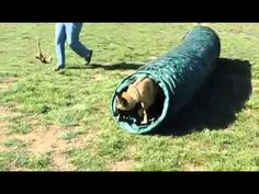 West Coast Malinois Rescue & Adoption, Adopt a Belgian Malinois Adoption, Belgian Malinois, West Coast, Dog, Foster Care Adoption, Diy Dog, Malinois Dog, Doggies, Dogs
