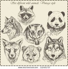 vector set: different wild animals - various vintage style. by 3Art, via ShutterStock