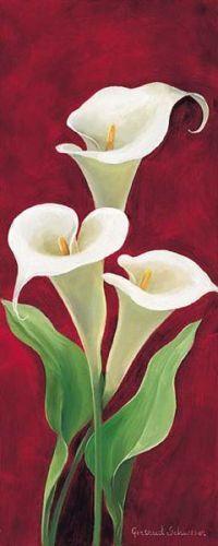 Gertrud-Schweser-Calla-I-Fertig-Bild-30x70-Wandbild-Blumen