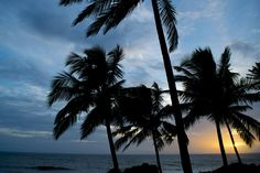 Sunset Behind the Palms Kovalam Beach Kerala [2048x1365][OC]. wallpaper/ background for iPad mini/ air/ 2 / pro/ laptop @dquocbuu
