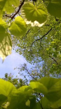 Spring Green Beautiful Landscape Wallpaper, Beautiful Flowers Wallpapers, Cute Wallpapers, Beautiful Landscapes, Photography Pics, Landscape Photography, Nature Photography, Nature Story, Profile Pictures Instagram