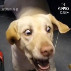 Lol you missed it Poor dog 😂 - Süße Tiere/ funny pets. Funny Animal Videos, Cute Funny Animals, Funny Animal Pictures, Animal Memes, Cute Baby Animals, Funny Cute, Funny Dogs, Animals And Pets, Cute Cats