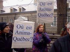 Anima Quebec ceased its activities