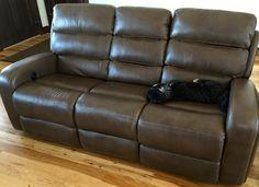Skippy on new sofa