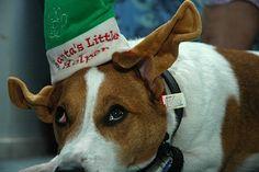 Christmas Jokes: Ho Ho Ho and Ha Ha Ha!