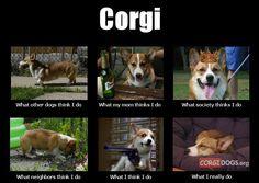 Corgi! ❤