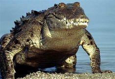 that's a croc!