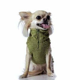 Picture of Fashion Dog