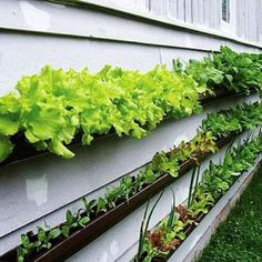 Love this gutter idea for the side of the house. Great for small spaces.