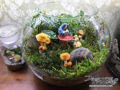 Related image Terrarium, Miniatures, Miniature Gardens, Green, Image, Decor, Terrariums, Decoration, Decorating