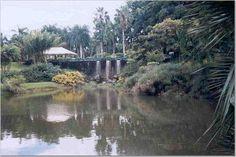 (Credit ⚓ Elizabeth Agron Photography ) Jardin Botánico Rio Piedras Puerto Rico  .