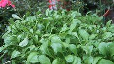 Bất Ngờ với ý tưởng trồng rau này trên sân garden idear Bonsai Art, Diy Organization, Minis, Life Hacks, Recycling, Make It Yourself, Garden, Creative, Plants
