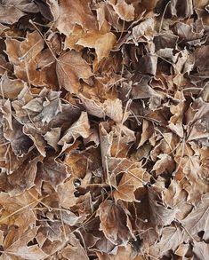 Crunchy leaves with a dusting of frost....