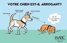 Votre chien est il arrogant1