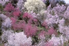 春になると梅、花桃、ヒガンザクラ、ソメイヨシノ、ヤエザクラ、レンギョウ、ボケ、モクレンなど様々な花が咲き乱れ、山全体を鮮やかに彩る。