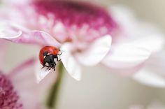 Ladybug by Mirka Wolfova on 500px