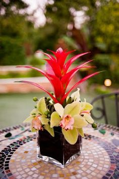 Red and green tropical flowers in square clear vases