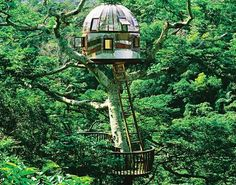 """When I envisioned Dorothea's tree house in my novels """"Hippie Drum"""" and """"Hippie Love,"""" I saw it cabled and cantilevered out over the river ..."""