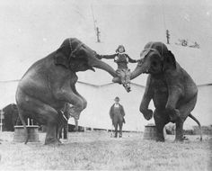 circa 1924: A woman sitting on the trunks of two elephants, while rehearsing her circus act. (Photo by Topical Press Agency/Getty Images)