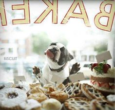 This is pretty much what I look like when I stop at a bakery window too. :P