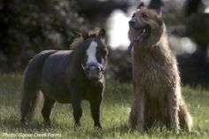 Meet the world's most miniature horse in this cute math story!