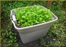 container vegetable gardening | Simple Vegetable Container Gardening