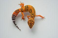 Blood Tangerine   JB Leopard Geckos