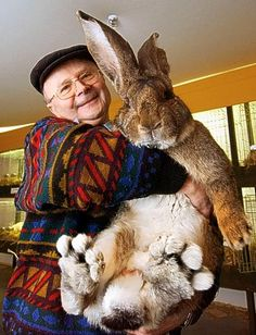 """big bunny aka The Flemish Giant :) This is a gentleman in Germany who raises them. I believe he has the largest Flemish Giant right now. They are also known as the """"gentle giant"""" as they are very much like dogs in temperament. Big Animals, Animals And Pets, Funny Animals, Giant Animals, Happy Animals, Adorable Animals, Giant Bunny, Big Bunny, Fluffy Bunny"""