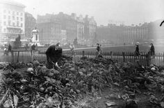 Piccadilly Gardens 1947 Allotments