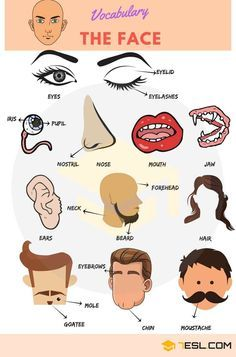 Parts of the Face! Names of different face parts in English with ESL pictures and examples. Being able to refer to the various parts of the face using English w Learning English For Kids, Teaching English Grammar, Kids English, English Vocabulary Words, English Language Learning, English Phrases, Learn English Words, English Writing, English Study