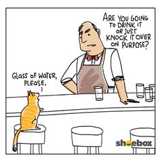 The truth about cats and their water glasses.
