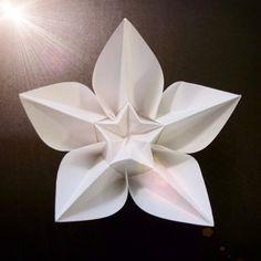 January 16th 2015  Origami carambola flower I made today. #origami #carambola #flower #papiroflexia #paper #folding #white #16 #black