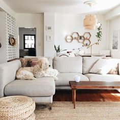cozy yet bright and airy living room with a light gray couch.. featuring adorable doggy!