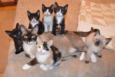 Stolze Katzenmamas und ihre Kinder - unfassbar.es