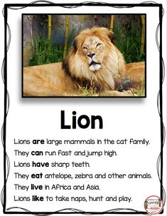 LIONS - All About Lions - Nonfiction Writing and Reading - Animal Reports - Zoo Unit - Kindergarten - First Grade - Second Grade - Informational Text - Non-Fiction Passages - FREEBIE Kindergarten Language Arts, Kindergarten Writing, Reading Comprehension Worksheets, Reading Passages, Fiction Writing, Writing A Book, Report Writing, Informational Writing, Nonfiction
