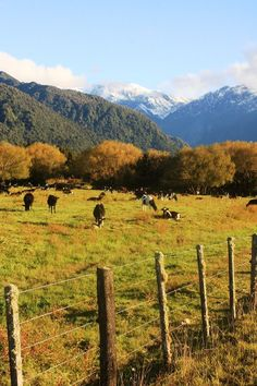 Southern Alps & Rural Landscape, South Island, New Zealand