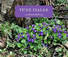Vůně jarních fialek Plants, Plant, Planets
