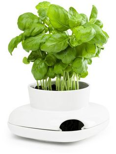 Herb Pot Single design by Sagaform - Stoneware watering pot for fresh herbs, vegetables, and flowers