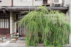 Japaninfo added 19 new photos to the album: ของกินของใช้ประจำวัน แอนตีค หัตถกรรม@Teramachi-douri/Kyoto.