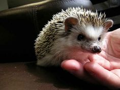 They're well-represented in literature. | 20 Enchanting Facts About Hedgehogs