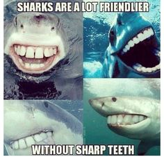 As many of you know this week is Shark Week. Here's a little dental humor Shark Week style for you! 9gag Funny, Funny Cute, Funny Memes, Teeth Funny, Funny Stuff, Memes Humor, Super Funny, Humour Quotes, Chistes