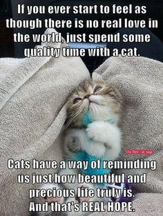 spend time with a cat.....