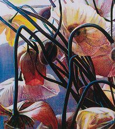 Tim Maguire Untitled, 2007 - Oil on canvas x in x 162 cm) Botanical Art, Botanical Illustration, Illustration Art, Artist Sketchbook, Environmental Art, Australian Artists, Illustrations, Gravure, Flower Art